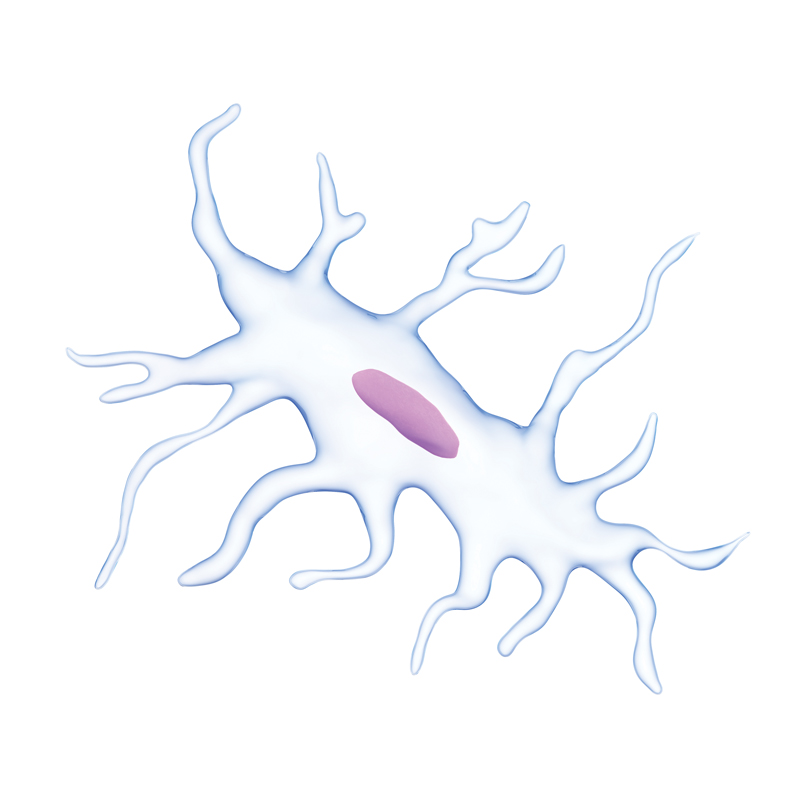 medically accurate illustration of an osteocyte